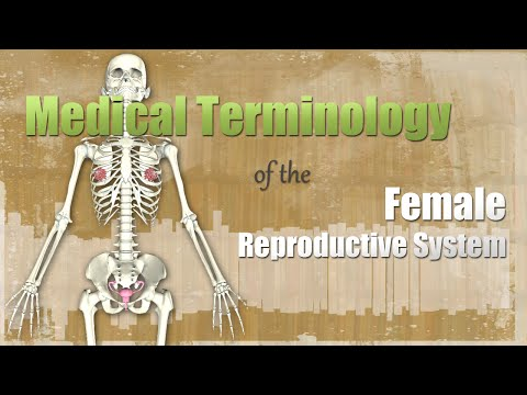 Medical Terminology of the Female Reproductive System - YouTube