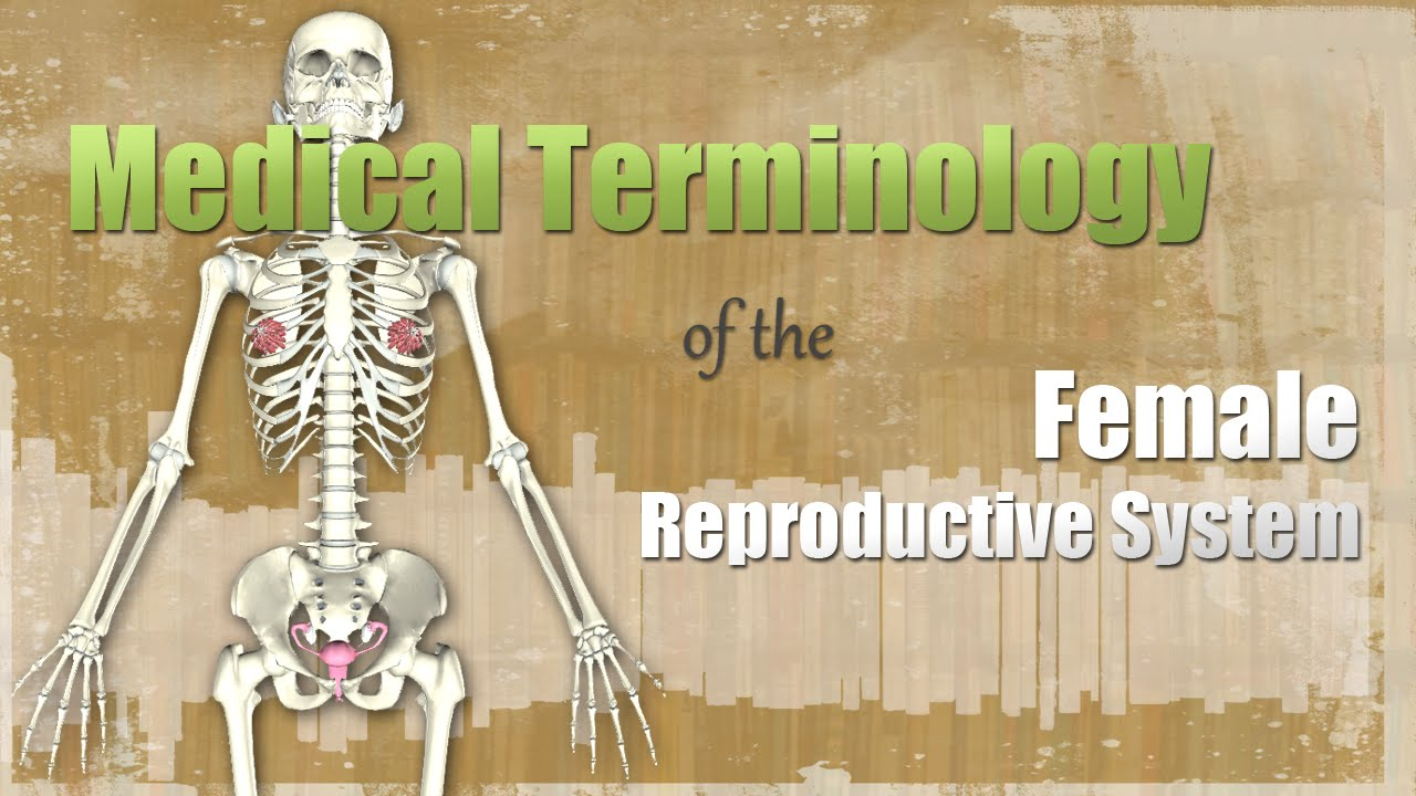 Medical terminology of the female reproductive system youtube ccuart Image collections