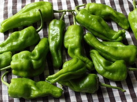 Pickled Padron Peppers in Sweet Spicy Vinegar - Pickled Peppers
