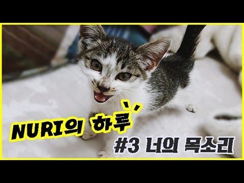 NURI 161209 너의 목소리  kitty cat sound