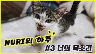 [NURI] 161209 너의 목소리 _ kitty cat sound