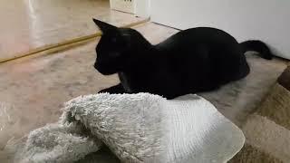 Нашли слепого котенка ФОТО История Маруси