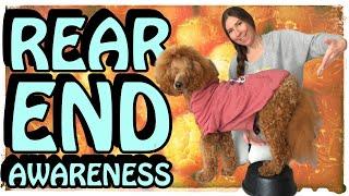 Rear end awareness for dogs   BACK UP & ORBIT DOG TRICK   Service dog training