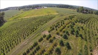 Grower explains How to start a Tree Farm