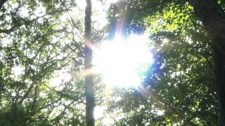 "Walter Schreifels - ""Arthur Lee's Lullaby"" Academy Fight Song"