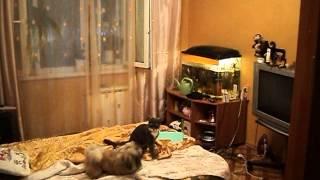 Война миров  Кошки против собак