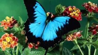 Keiko Matsui - Blue Butterfly