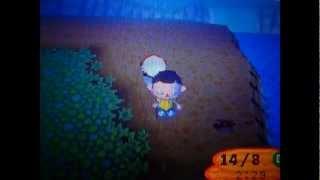 Animal Crossing Special: Taranteln / Skorpione und besondere Fische & Insekten ~ Teil 2