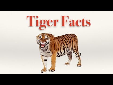 Interesting Tiger Facts