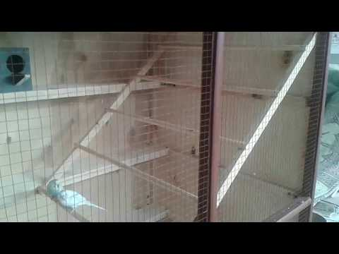 Large bird cage for Budgies with wood