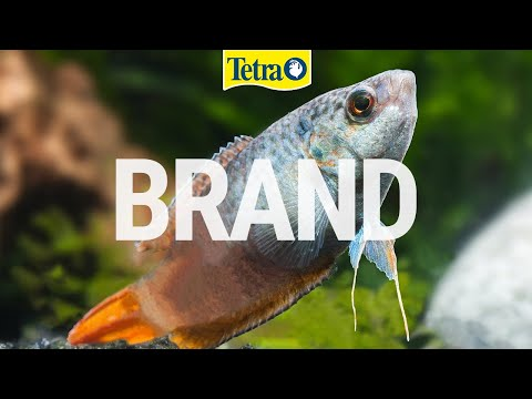 Tetra | Best Choice