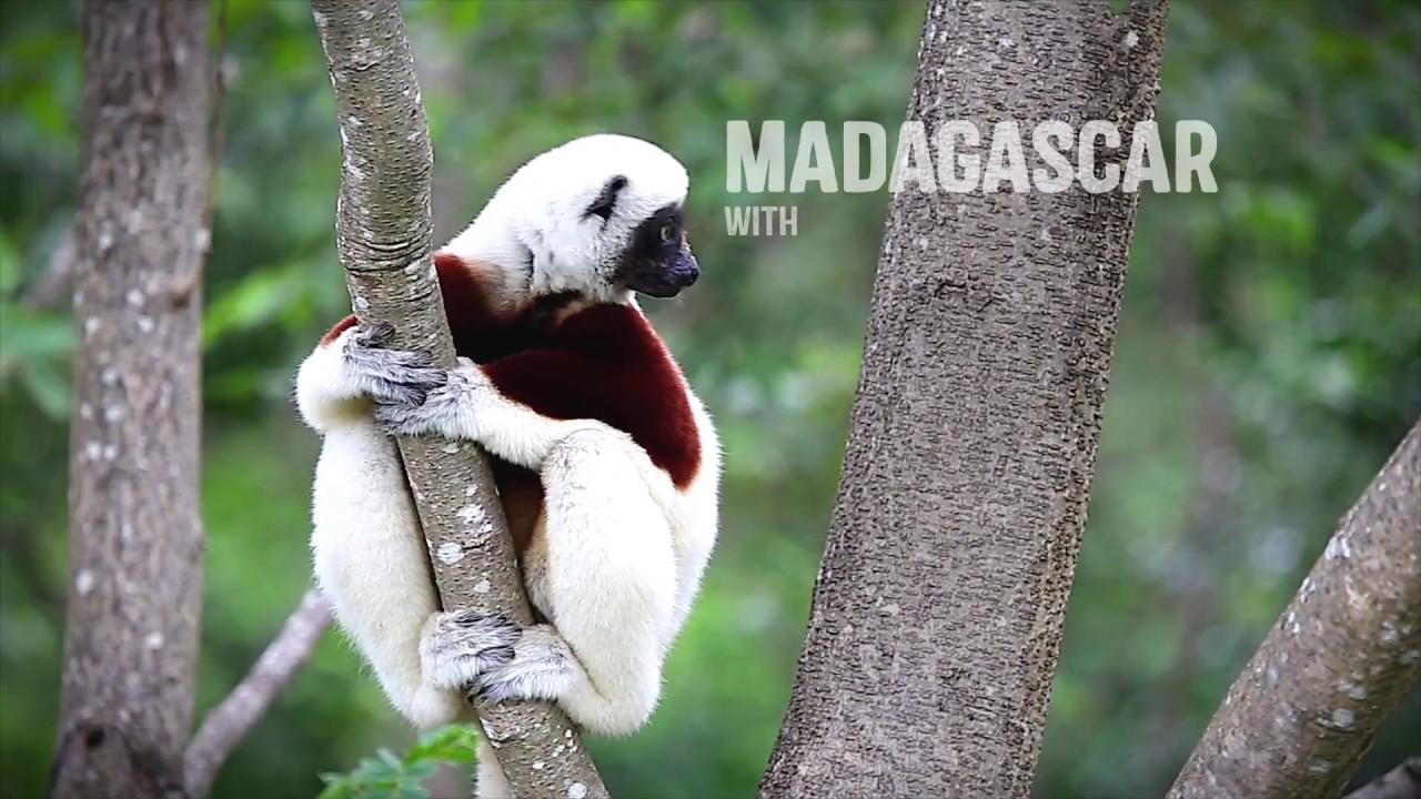 Madagascar Holidays 2019/2020 | Rainbow Tours