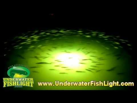 hundreds of ladyfish over a snook light in charlotte harbor, Reel Combo