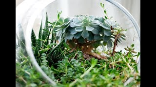Ep 043: Crafting a Terrarium - Plant One On Me