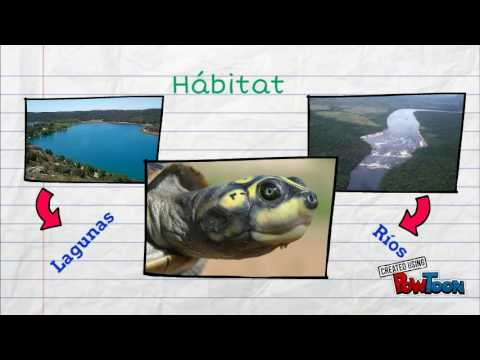 Proyecto tortuga arrau