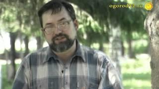 видео Птицы и насекомые: вредители или помощники?