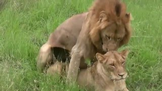Funny Animals Mating 2015 Compilation | Best Animal Funny Moments