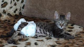 Фото-история котёнка с травмой позвоночника