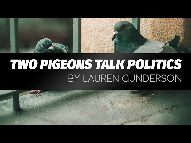 Two Pigeons Talk Politics