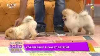 Köpek eğitimi konusunda merak edilenler