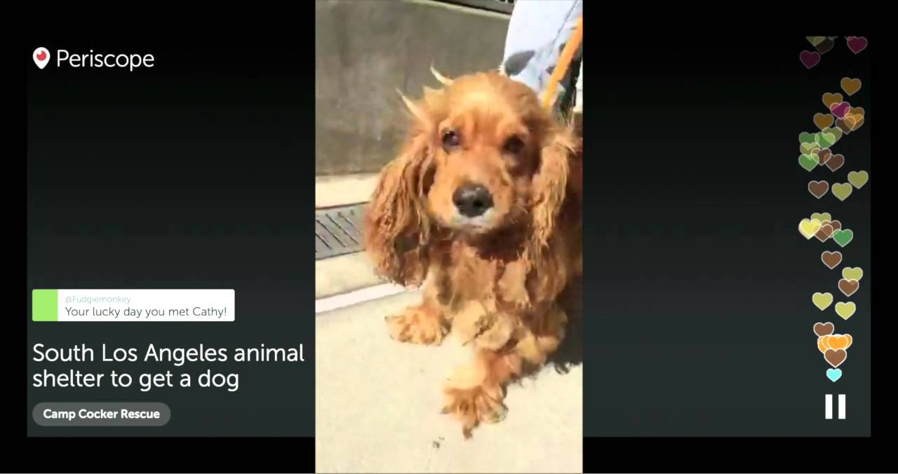 emily rescued from the south los angeles animal shelter 9 13 15