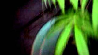 Oaxaca santarosa d lima cultivacion
