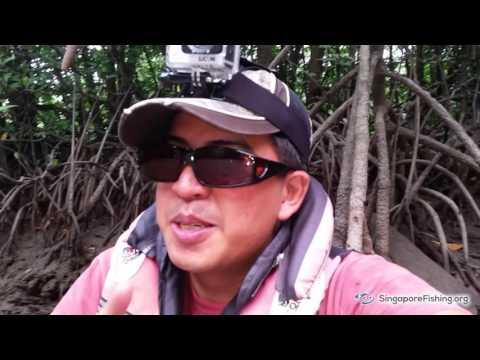 Kayaking, Camping and Fishing @ Mamam Beach, Pulau Ubin - Mangrove trail