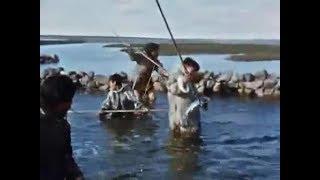 Рыбалка запрудой и острогой - захват(инуиты) - 2 часть. Fishing in the dam and spear - capture