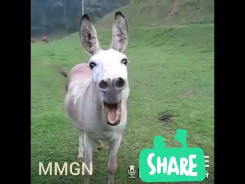 WhatsApp funny comedy video- animal WhatsApp comedy video 2018 best video