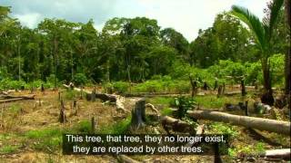 UN-REDD Indonesia.mov