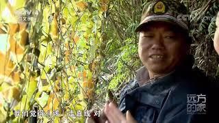 [远方的家]行走青山绿水间 丹山碧水龙虎山  CCTV中文国际