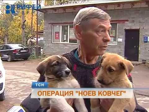 В Перми стартовала акция по спасению брошенных на дачах собак и кошек