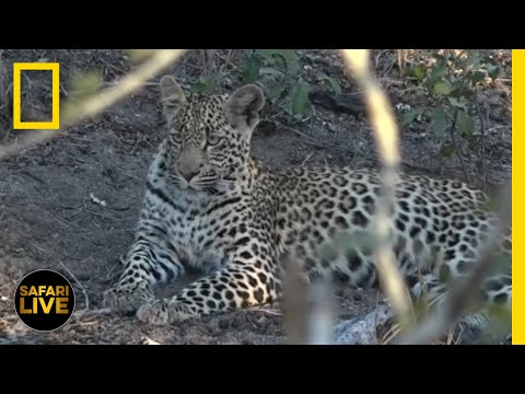 Safari Live - Day 246 | National Geographic