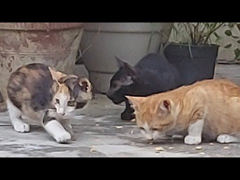Funny Baby Cats r 🐱 Enjoying together 🐈