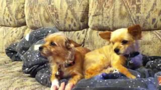 Dogs buzzed on catnip