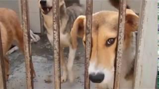 Сделай доброе дело- возьми собаку из приюта!