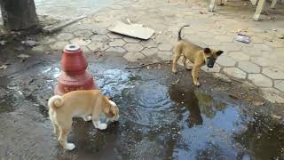 Baby Dogs Playing - Dogs Videos - Cute Dogs - Funny Dogs - Dogs 2020