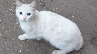 Hungry cat - White cat really wants to eat