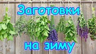 Заготовки 2017 - ягода, горлодер, травы, овощи. (09.17г.) Семья Бровченко.