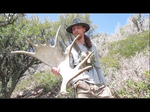 2016 Utah Wasatch Front Hard Core Elk & Moose Shed Hunting ( Jeremy Brown ) Brandon Pitcher