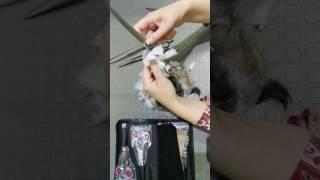 Ножницы для стрижки животных собак и кошек обзор