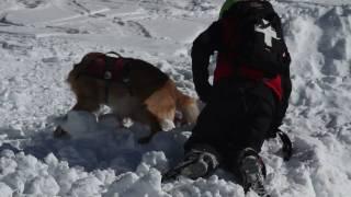 Avanlanche Puppy Training