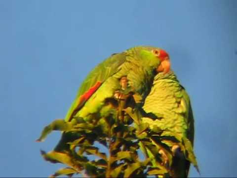 Parrot Pandemonium in Tustin, CA