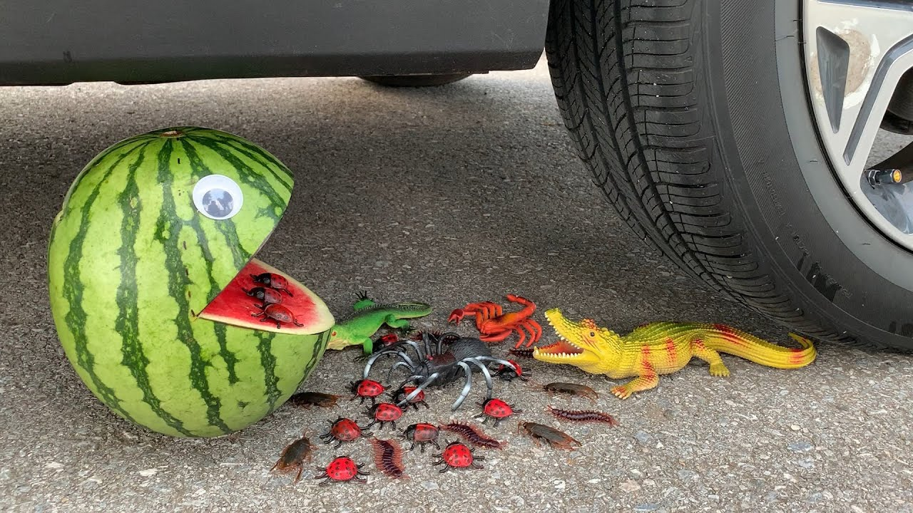Experiment Car vs Watermelon vs Insect Bug Toy | Crushing Crunchy & Soft Things by Car | Car US