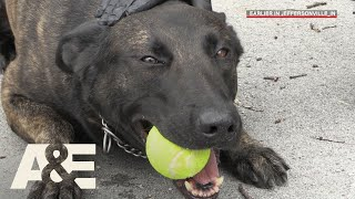 Live PD: Running Drills with K9 Flex (Season 2) | A&E