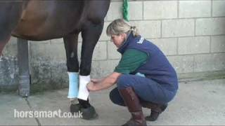 How to bandage your horse for exercise