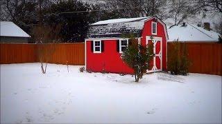Snow + Garden + Beagles + Chickens