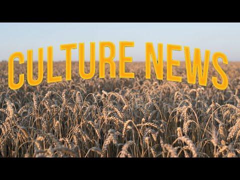 Culture News : Les cours élevés des céréales vont-ils durer ?