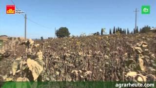 Italien - Ackerbau extrem (Teil 2: Toskana)