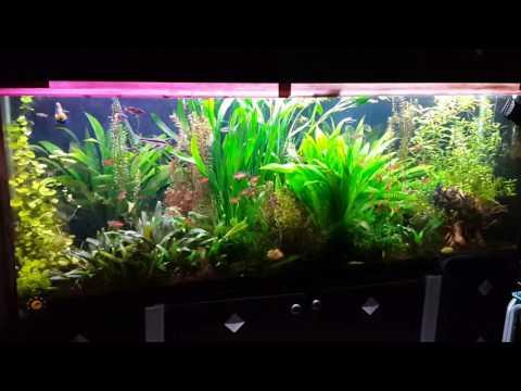 Planted aquarium by PaniaPlant group in iran    آکواریوم گیاهی اجرا شده توسط گروه پانیاپلنت در ایران